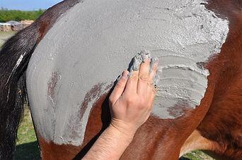 Algothérapie équine