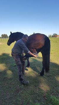 physiothérapie équine