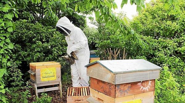 insolite-des-ruches-connectees-pour-surv