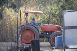 Chino Farms