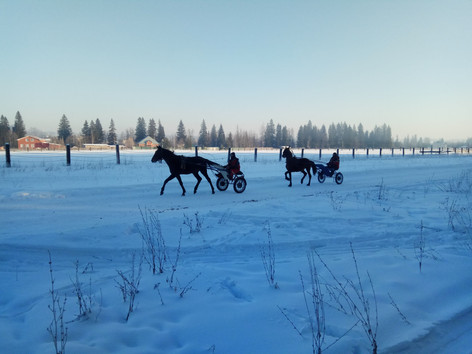 Near the horse farm in winter.