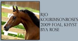 rjokourimsonrose_foal