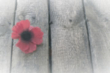 Day%20of%20memory%20red%20poppy%20symbol