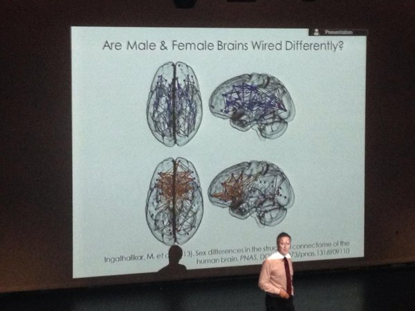 Female/male differences in the brain