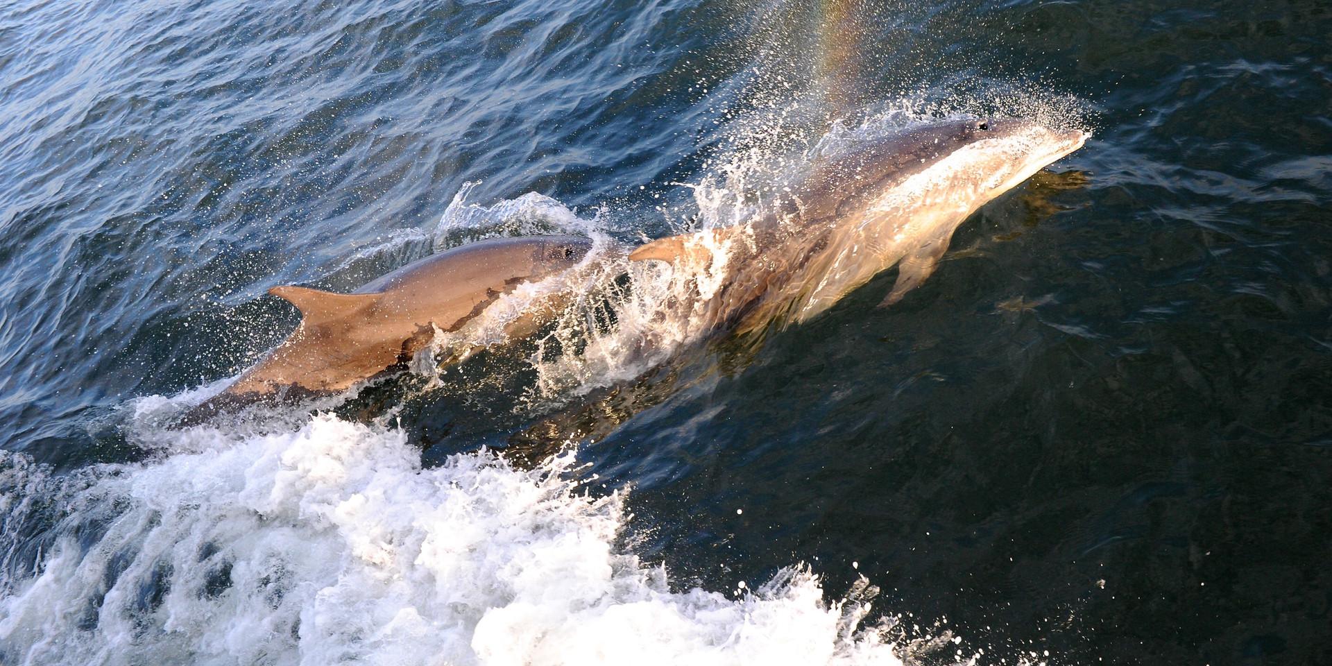 Moray Firth Dolphin Boat Trip