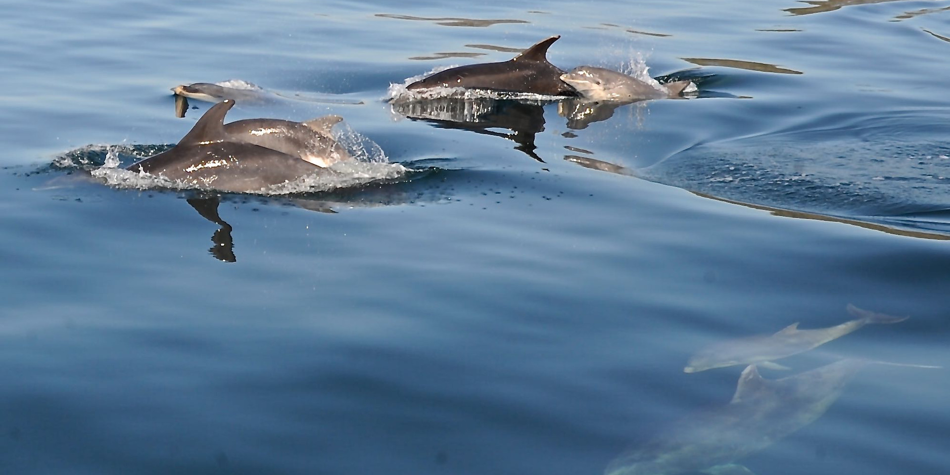 Dolphins by Orlik