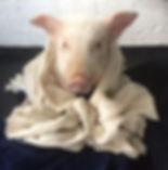snort in towel.jpg