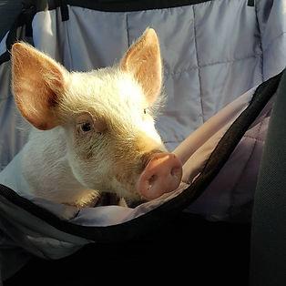 Snort in car.jpg