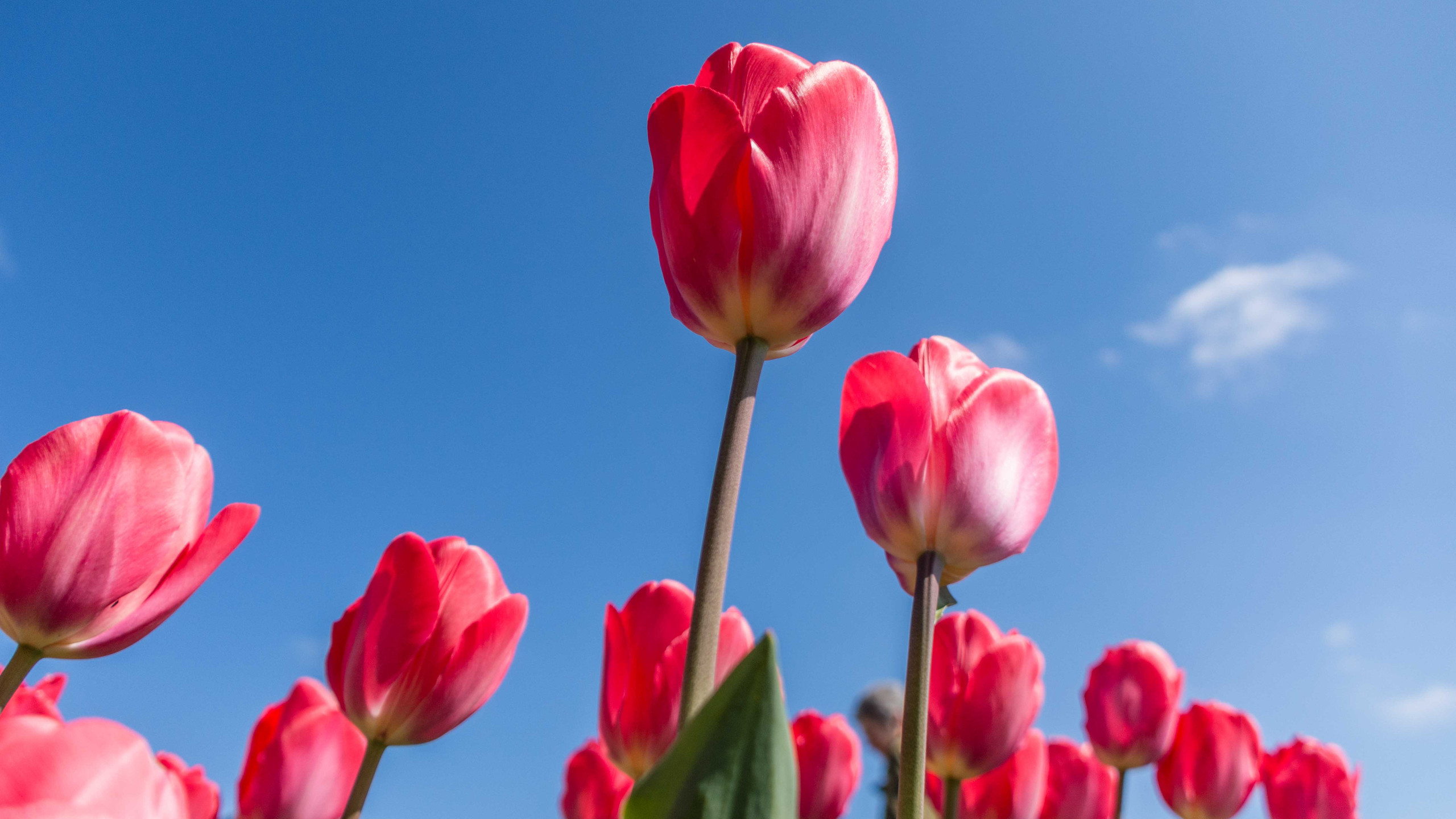 Daffodils (7 of 8)