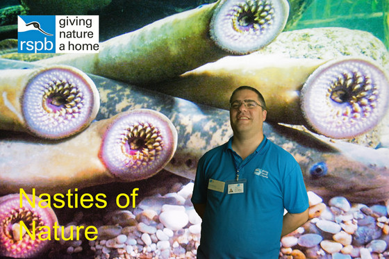 Nasties of nature - A presentation by Dr. Chris Andrews (RSPB)