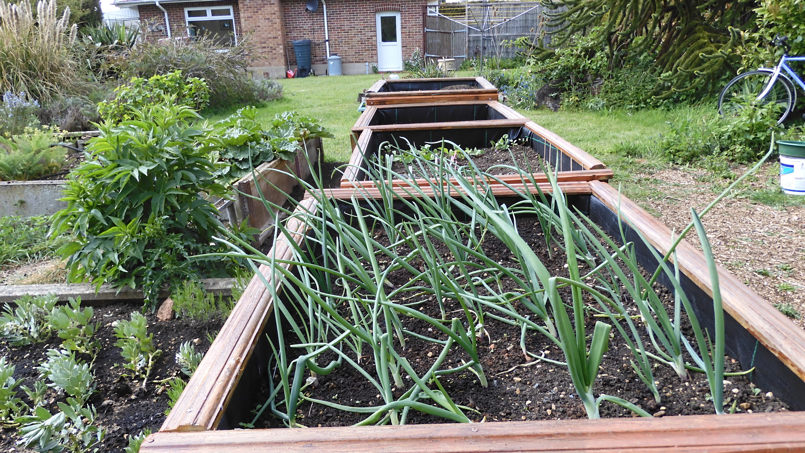 Tops of raised beds
