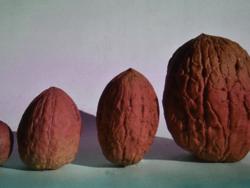 Nut Growing in Britain