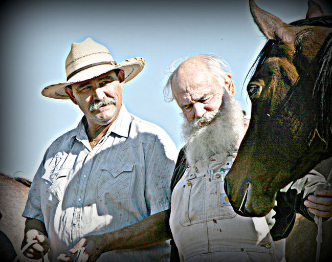 Equine Dentistry, Horse Dentistry, Equine Gnathological Training