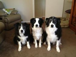 Mack, Aspen and Mystar