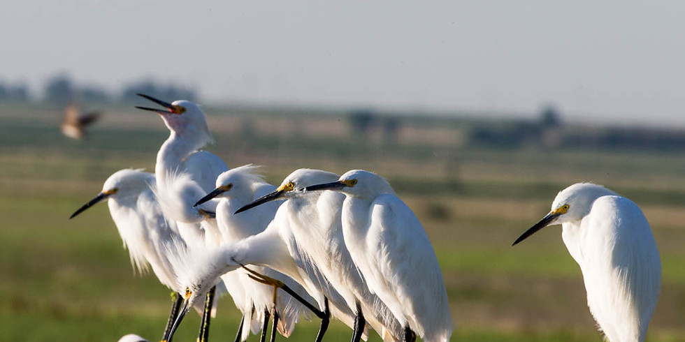 Wings and Wetlands Festival