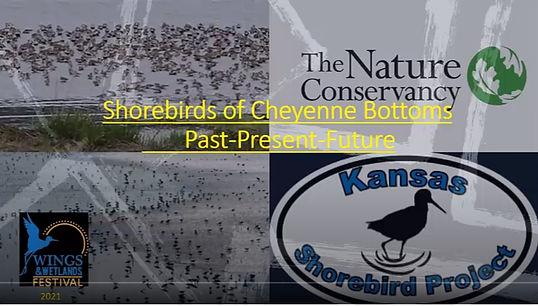 Shorebird Video.jpg