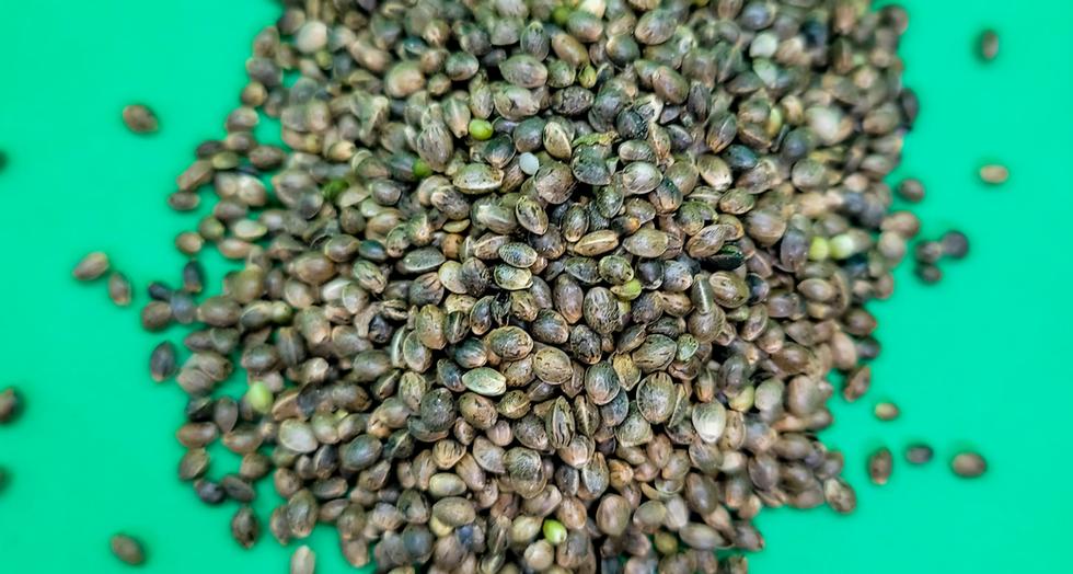 Hemp Seed.png