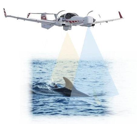 Airborne Dolphin2a.jpg