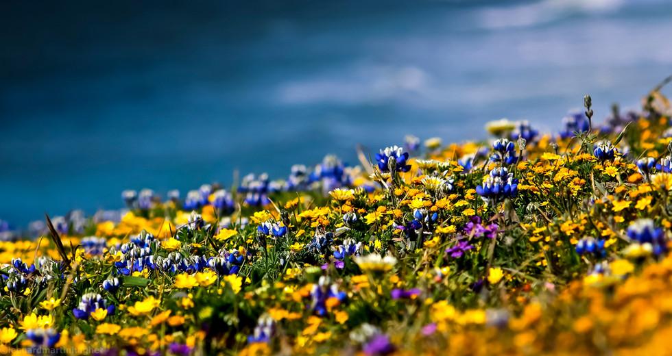 mori point flowers