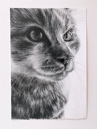 Drama Cat (Print)