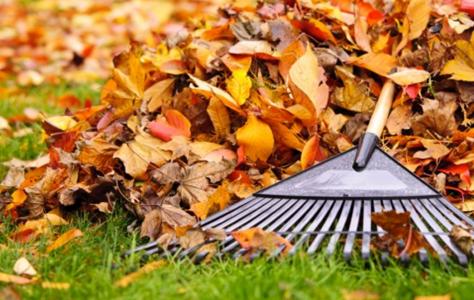 Fall Garden Maintenance Tips