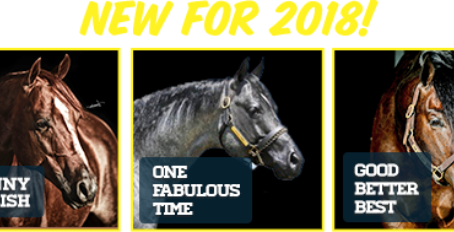 Three new Stallions joining the EE Ranches 2018 Breeding Season line-up