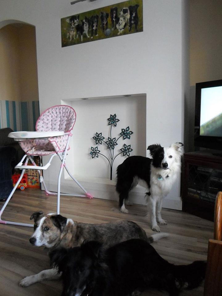 UK Dogs