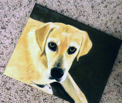 Yellow Lab - Oil on Canvas (SOLD)