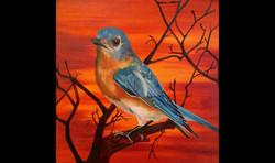 Eastern Blue Bird Orange Pop (SOLD)