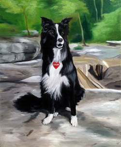 Chloe the Border Collie (SOLD)