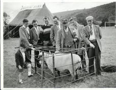 Purslow Sports - sheep