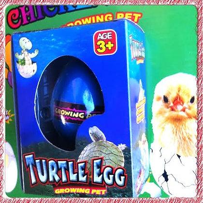 Huevo de animalito en caja