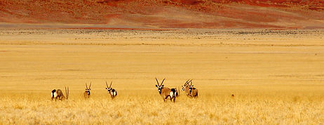 Süden in Namibia