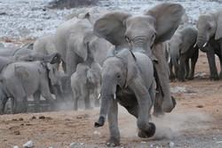 Elefantenherde im Etoshapark