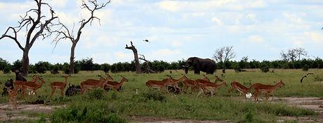 Savute Botswana