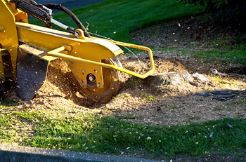 Our stump grinding machine in action, taking care of a difficult stump removal.