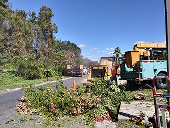 Hayes Tree Service Inc 727-857-7673 Emergency tree service call underway - clearing a tree from the road in New Port Richey FL