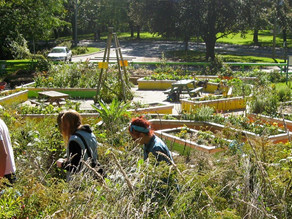 Curious About Urban Agriculture? Check out Urban Ag Week