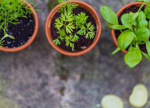 Herb Growing 101: How to Grow Your Own Herbs at Home