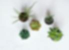 Houseplants.png