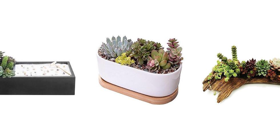 Succulent Dish Garden @ A Different Booklist