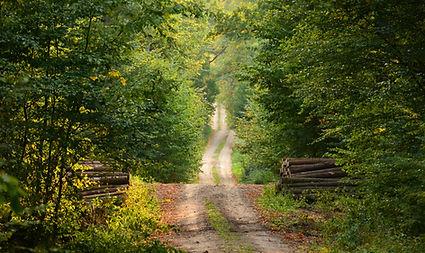 Chemin, fôret, sentier, bois, arbre