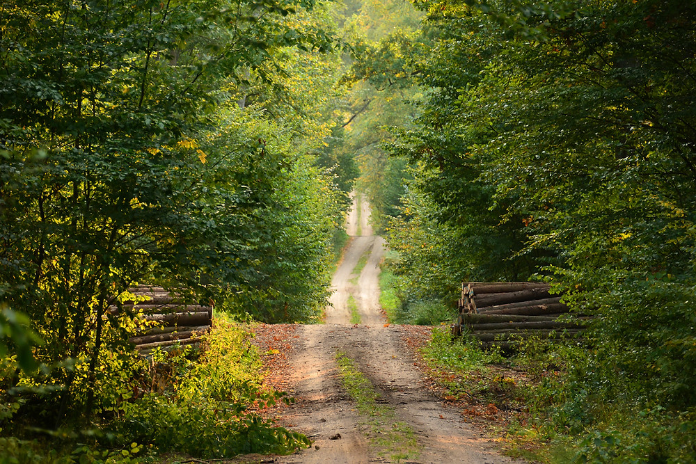 path country road forest logs