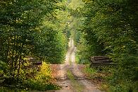 Wild Path