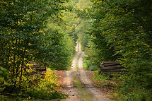 Country dirt road surrounded by trees