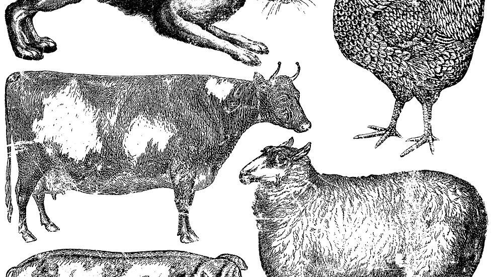 FARM ANIMALS 12×12 DECOR STAMP™