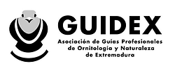 GUIDEX.png