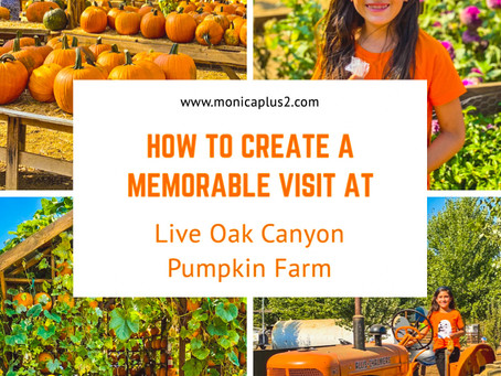 How To Create A Memorable Visit At Live Oak Canyon Pumpkin Farm