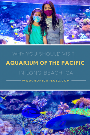 Why You Should Visit Aquarium Of The Pacific In Long Beach, CA