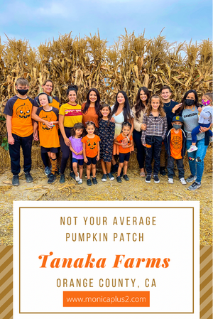Tanaka Farms Pumpkin Patch. Not Your Average Pumpkin Patch In Orange County